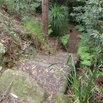 Well formed steps on the Callicoma Walk (154528)