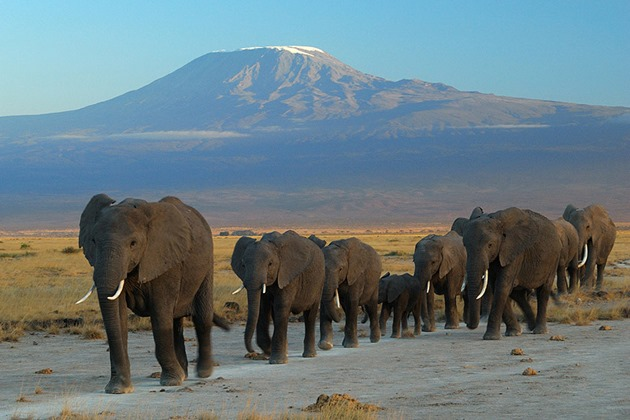 Elephants at Amboseli National Park, Kenya