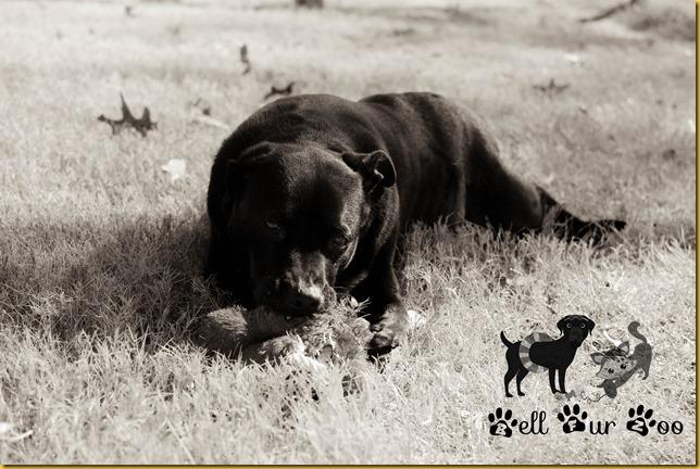 Matt B&W January 28th (copyright Bell Fur Zoo)