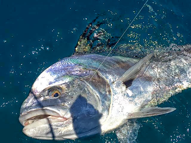 The east cape s fishing season is in full swing bloodydecks for Where are the fish biting near me