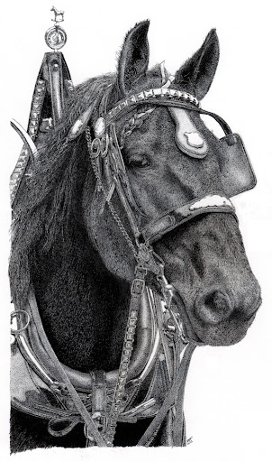 Percheronpenandinkdrawing-2012-10-29-12-44.jpg