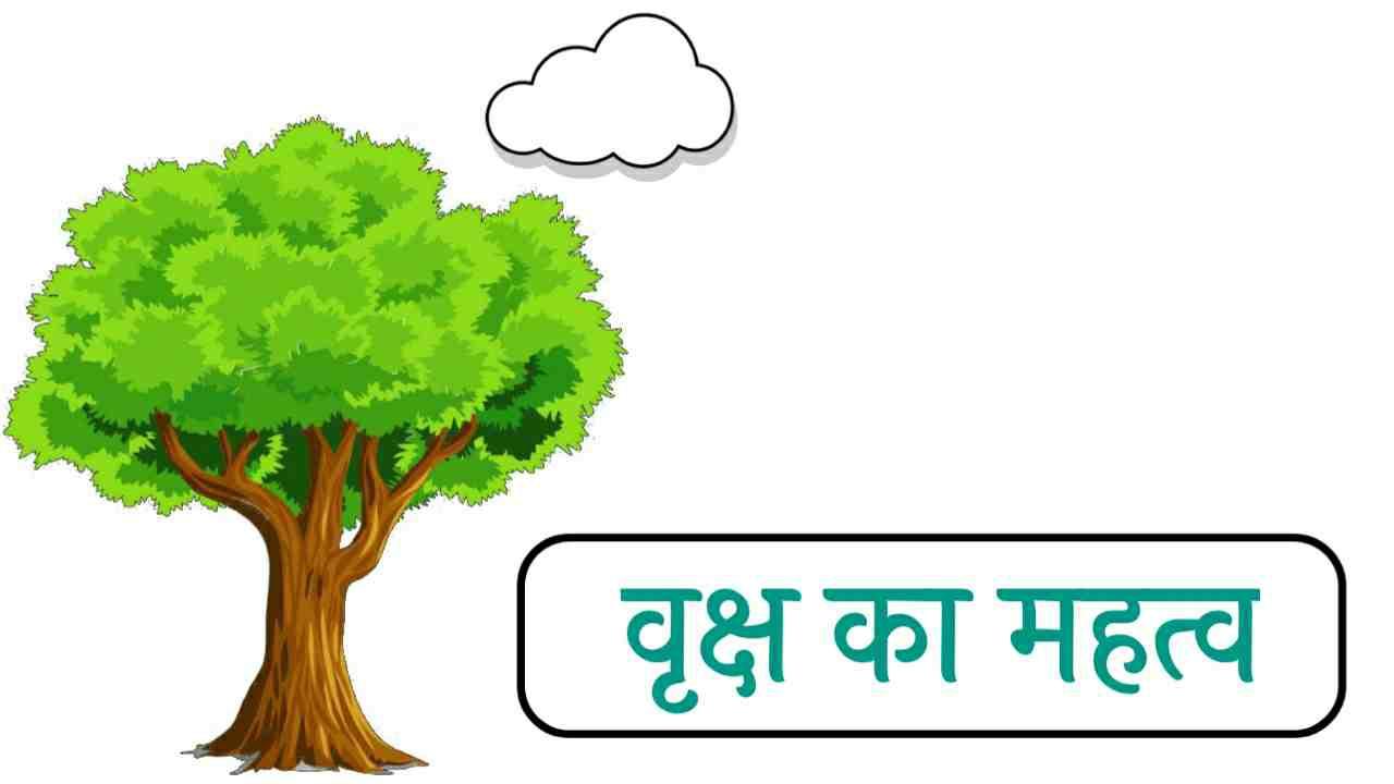 वृक्षों का महत्व   पेड़ - पौधों का महत्व   वृक्षों के महत्व पर निबंध   पेड़ पौधों के महत्व बताते हुए निबंध।