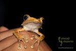 2014.11.28-30 - Biodiversity Adventure, UNAND