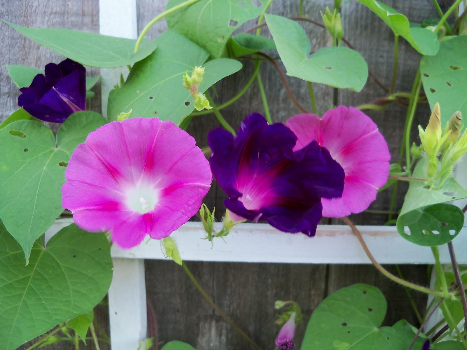 Gardening 2011 - 100_8122.JPG