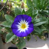 Gardening 2012 - IMG_3777.JPG