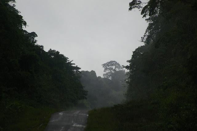 Camp Patawa (après la pluie), Montagne de Kaw (Guyane), 14 novembre 2011. Photo : J.-M. Gayman
