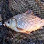 20140404_Fishing_Prylbychi_046.jpg