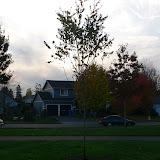 Tree Planting November 2010 - 110410%2B067.JPG