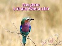 buongiorno buon giorno immagine con frase aforismo uccellino a chi ama vivere a colori.jpg