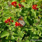 10-26-14 Dallas Arboretum - _IGP4326.JPG