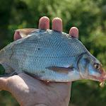 20140612_Fishing_BasivKut_018.jpg