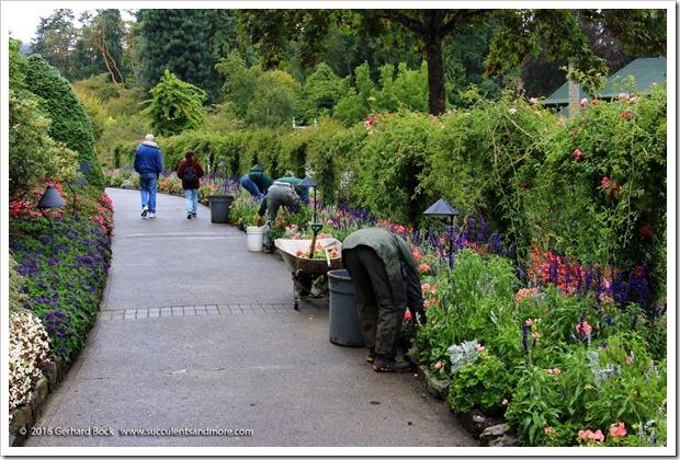 160906_Butchart_Gardens_0030