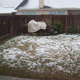 Snow Day - 101_5989.JPG
