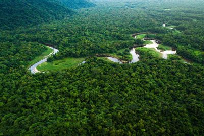 अमेज़न जंगल - anokhagyan.in