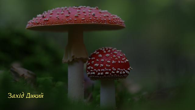 шкідливі гриби