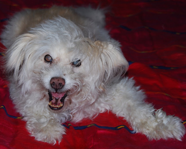Freddie my dog