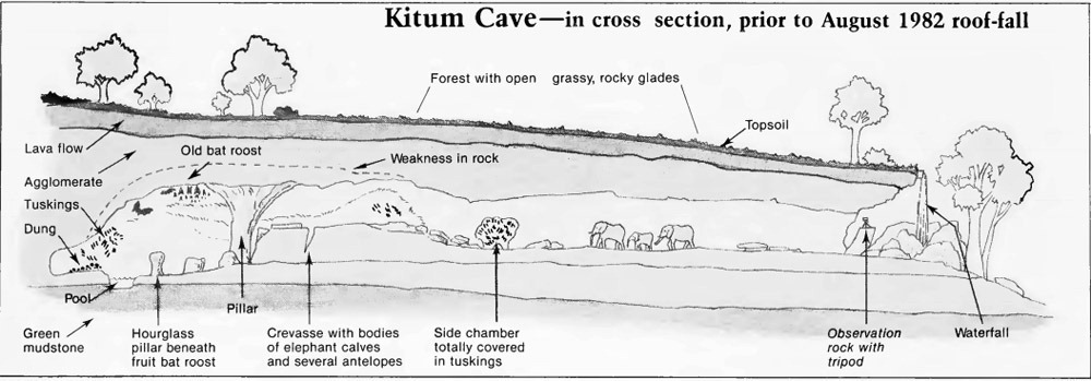kitum-cave-cross-section2