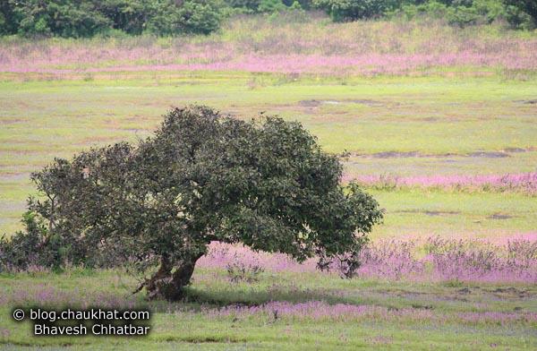 Postcard Picture? At Kas Plateau