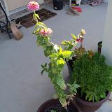 Gardening 2011 - 100_9264.JPG