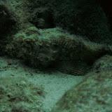 Bonaire 2011 - PICT0235.JPG