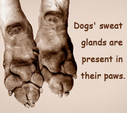 Study More Facts: Interesting Facts About Dogs