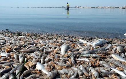 Ισπανία : Περίπου 4,5 τόνοι νεκρών ψαριών ξεβράστηκαν στις νοτιανατολικές ακτές της χώρας