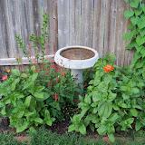 Gardening 2011 - 100_7726.JPG