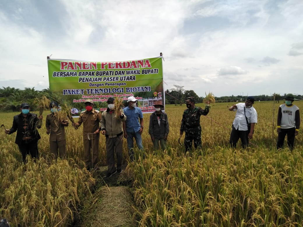 Babinsa Waru Dampingi Wakil Bupati PPU Panen Padi Perdana Dengan Tehnologi Biotani