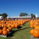 Pumpkin Patch 2014 - 116_4471.JPG
