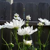 Gardening 2010, Part Three - 101_3799.JPG