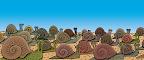 Snail Stampede