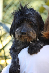 Marley - Rehomed Germany