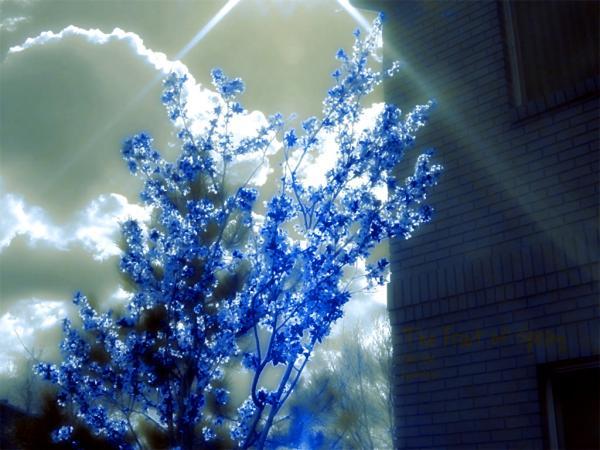 Magick Landscape Of Deep 2, Magical Landscapes 6
