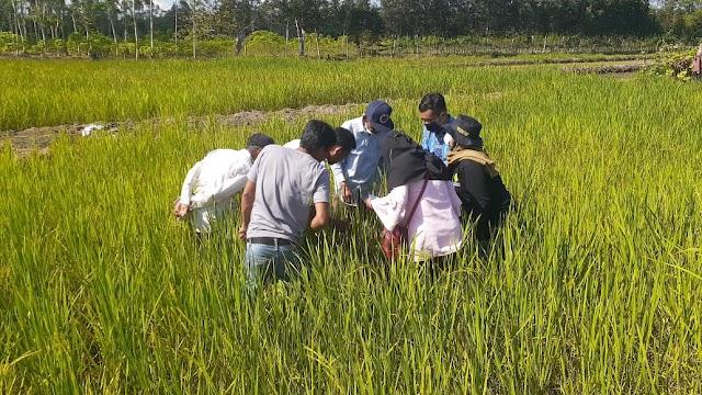 Amankan Produksi Padi, BBPP Binuang Gelar Pelatihan Pengendalian OPT