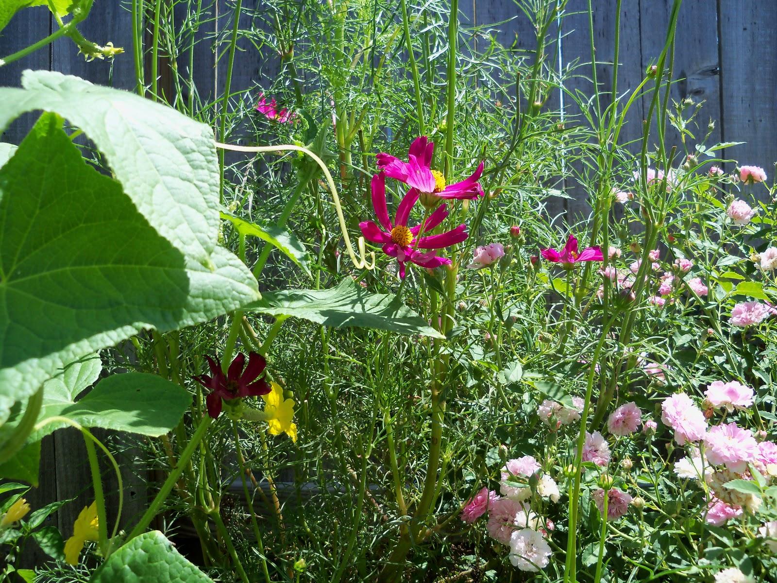 Gardening 2010, Part Three - 101_4402.JPG