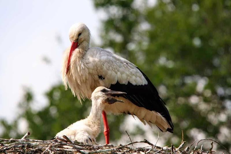 Vogels en dieren - IMG_7276.JPG