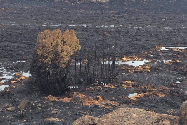 Area blackened in northern Tasmania after bushfire, 30 January 2016. Photo: Dan Broun