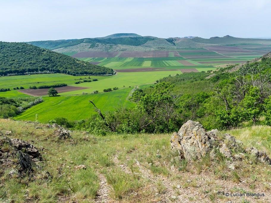 Vedere de sus spre Poiana Cozluc