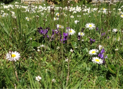 french village diaries silent sunday wild flowers Spring