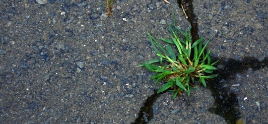 Grass growing in a crack in the footpath