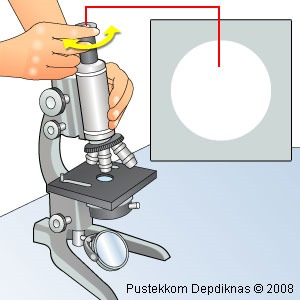 Cara menggunakan mikroskop cahaya
