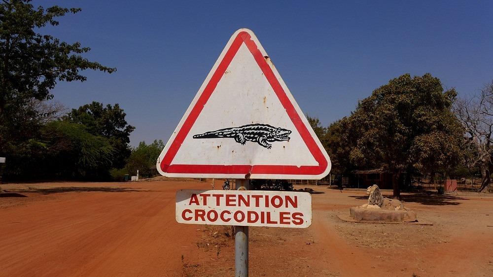 bazoule-crocodiles-3