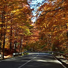 by Angela Codrina Andries Bocse - Transportation Roads