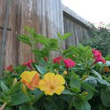 Gardening 2012 - IMG_2938.JPG