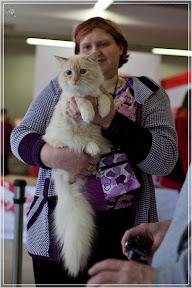 cats-show-24-03-2012-fife-spb-www.coonplanet.ru-060.jpg