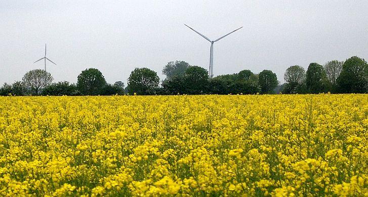 Windräder über Rapsfeld bei Kalkar