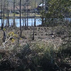 Fowl Marsh from Boat Feb3 2013 150