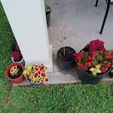 Gardening 2010, Part Three - 101_3627.JPG