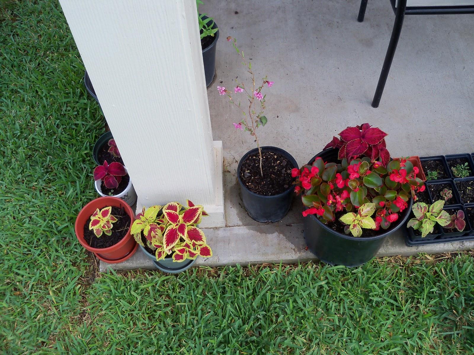 Gardening 2010, Part Three - 101_3627.JPG