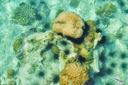 explore-pulau-pramuka-nk-15-16-06-2013-024